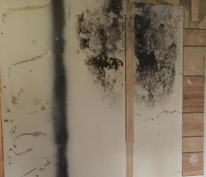 Hot Water Heater Leak Leads to Mold