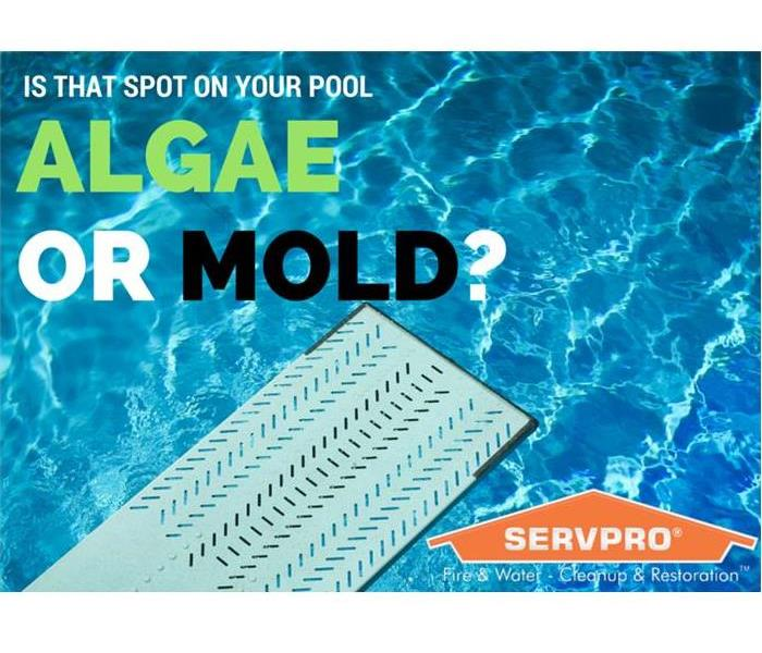 Mold Remediation Summer is here! Time to go for a dip in the pool to cool off for a bit!