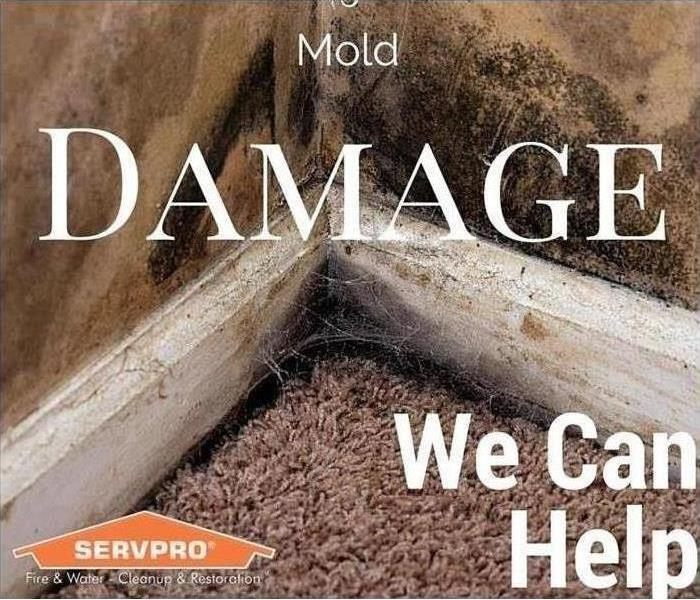 Mold Remediation How To Tell Mold From Mildew: 3 Key Identifiers