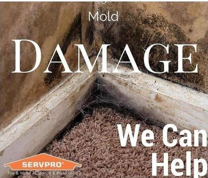Mold Remediation Understanding the Science Behind Molds and Mold Remediation