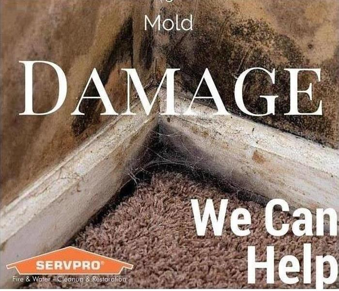 Mold Remediation Mold is no match for us