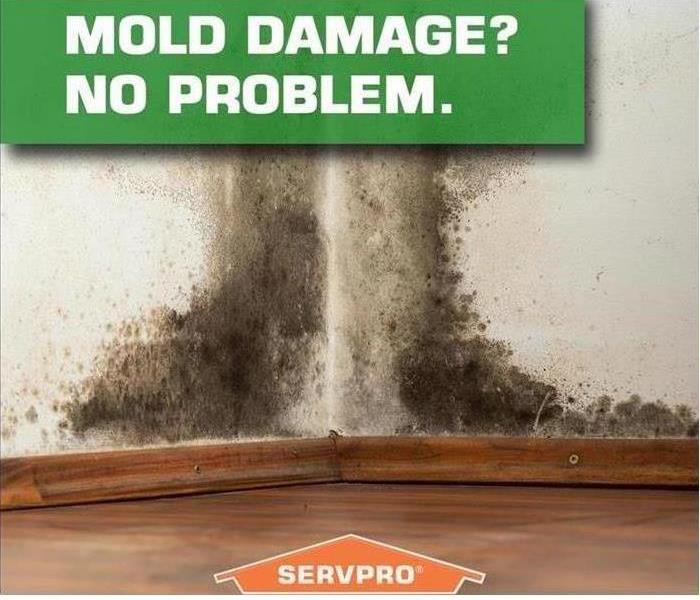 Mold Remediation Managing the Mold Remediation Process