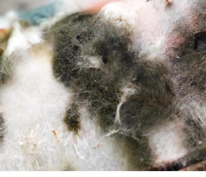 Mold Remediation Answers to Common Questions About Mold